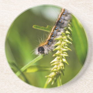 Fuzzy Eastern Tent Worm Caterpillar Beverage Coasters