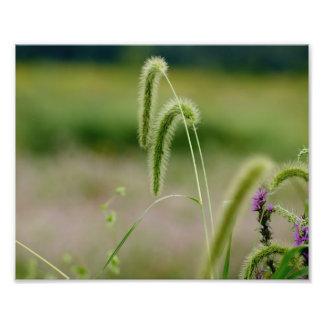 Fuzzy Grasses 10 x 8 Photographic Print