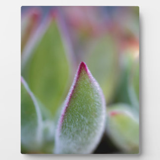 Fuzzy Green Succulent Leaves Macro Display Plaques