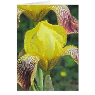 Fuzzy Iris Customizable Template Card