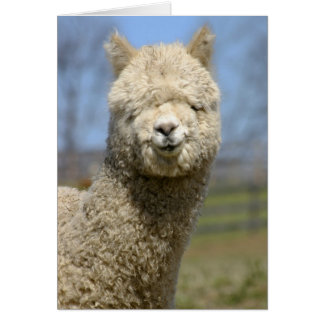 Fuzzy White Alpaca Face Card