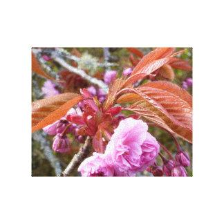 Gaeshi Cherry Blossom Canvas Prints