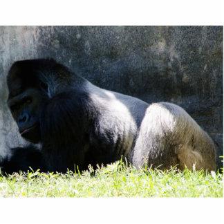 Gag Gift Gorilla 3-d Standing Photo Sculpture