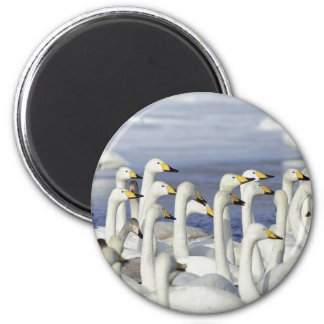 Gaggle Geese 6 Cm Round Magnet