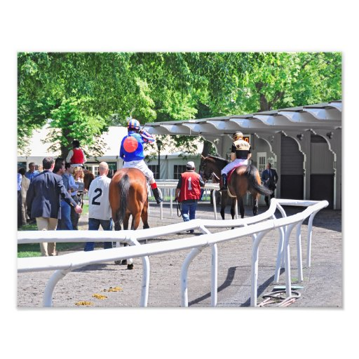"""""""Gala Award"""" in the Paddock at Belmont Park Photo"""
