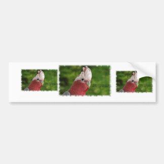 Galah Parrot (Rosakakadu) Bumper Sticker