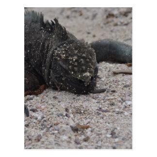 Galapagos1 Postcard
