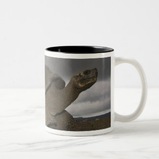 Galapagos Giant Tortoise Geochelone Two-Tone Coffee Mug
