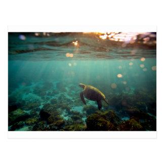 Galapagos green lagoon sea turtle underwater postcard