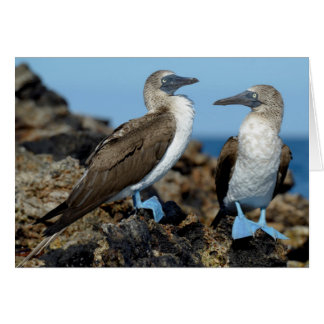 Galapagos Islands, Isabela Island Card