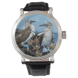 Galapagos Islands, Isabela Island Wristwatches