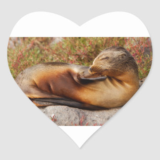 Galapagos Sea Lion Heart Sticker