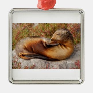 Galapagos Sea Lion Metal Ornament