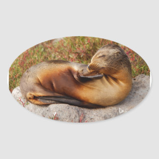 Galapagos Sea Lion Oval Sticker