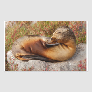 Galapagos Sea Lion Rectangular Sticker