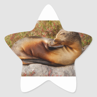 Galapagos Sea Lion Star Sticker