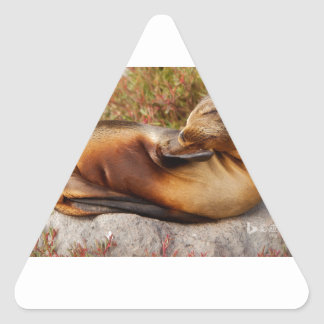 Galapagos Sea Lion Triangle Sticker