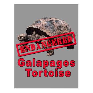 Galapagos Tortoise  Endangered Art Tshirts Postcard