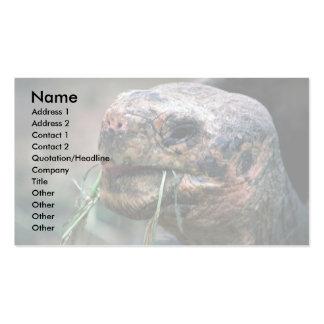 Galapagos Turtle, Galapagos Islands Business Card