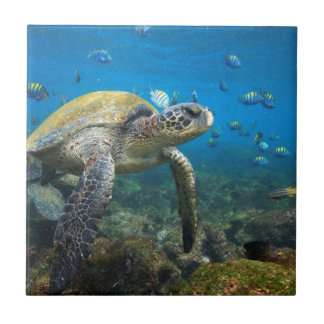 Galapagos turtles swimming in lagoon tile