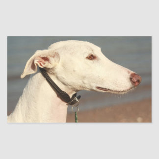 Galgo wind dog rectangular sticker