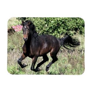 Galloping Chestnut Horse Magnet