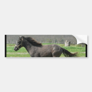 Galloping Colt Bumper Sticker