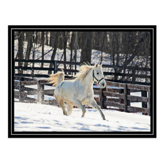 Galloping White Horse Post Cards