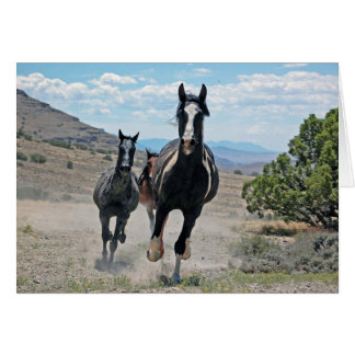 Galloping Wild Horses Greeting Card