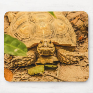 Gambia Tortoise Mouse Pad