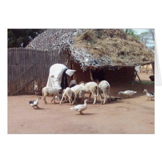 Gambian Farmer Card