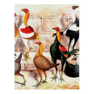 """""""Game Bantams"""" Vintage Illustration Postcard"""