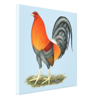 Gamecock Blue Red Rooster Canvas Print