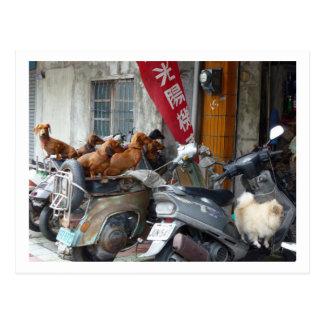 Gang of Doxies postcard
