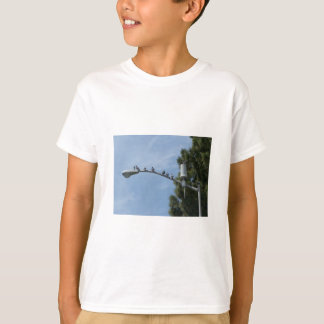 Gang Of Eight Pigeons Sitting On The Lamp Post Nea T-Shirt