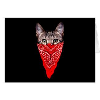 gangster cat - bandana cat - cat gang card