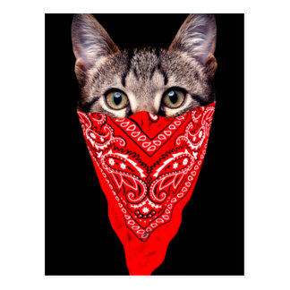 gangster cat - bandana cat - cat gang postcard