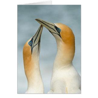 Gannet greeting Card