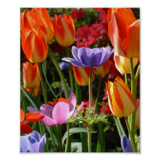Garden Beauty Poster