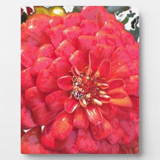 Garden Blooms - Red Plaques