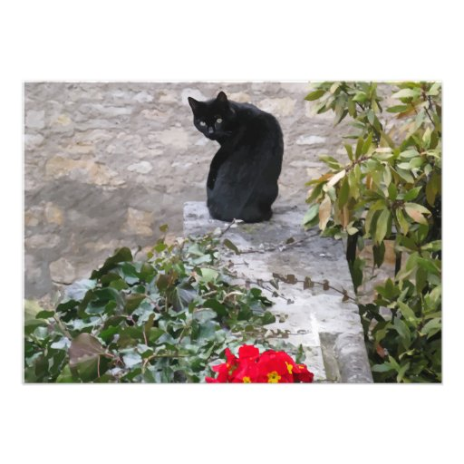 Garden Cat Birthday Announcement