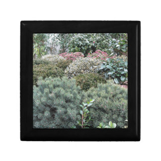 Garden centre with selection of nursery plants small square gift box