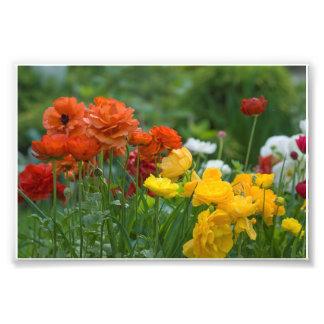 Garden flowers photo art