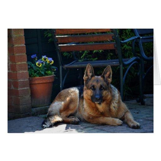 garden, german shepherd, dog cards