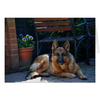 garden, german shepherd, dog greeting card