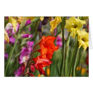 Garden gladiolus (Gladiolus x hortulanus) Card