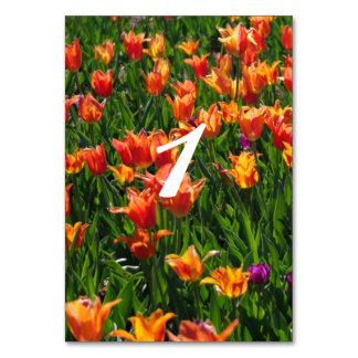 Garden in Orange Card
