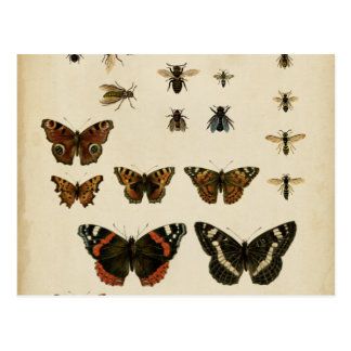 Garden Insects by Vision Studio Post Card