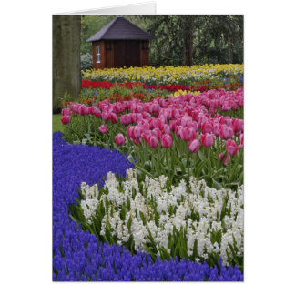 Garden of grape hyacinth, hyacinth and tulips, card