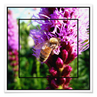 """Garden of Life"" Liatris Bloom Bee Rocky Mountains Photographic Print"